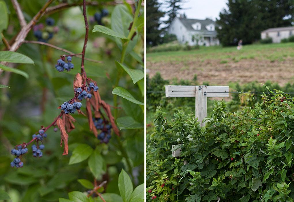 Hudson Valley Farm Photographer