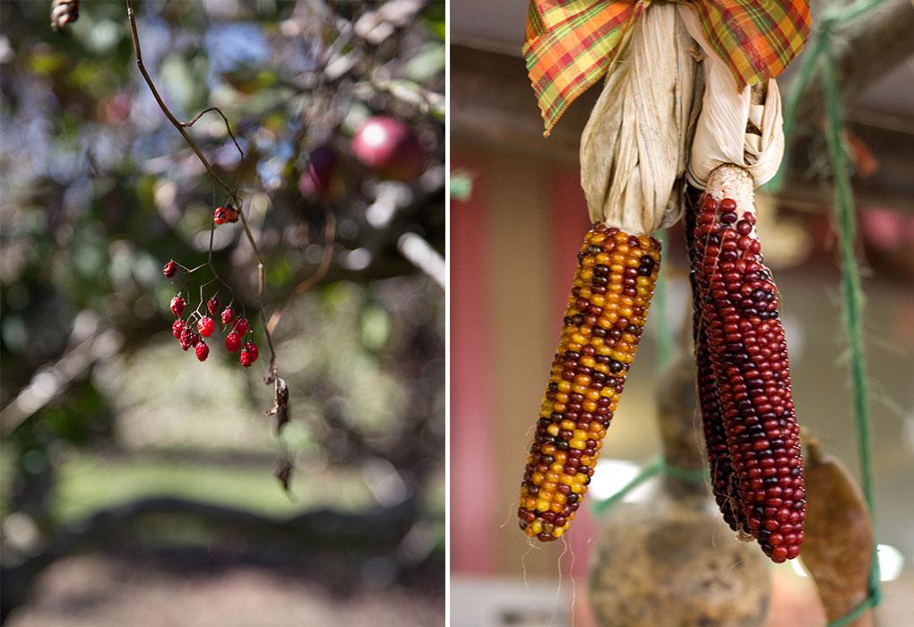 Hudson Valley Farm Photography